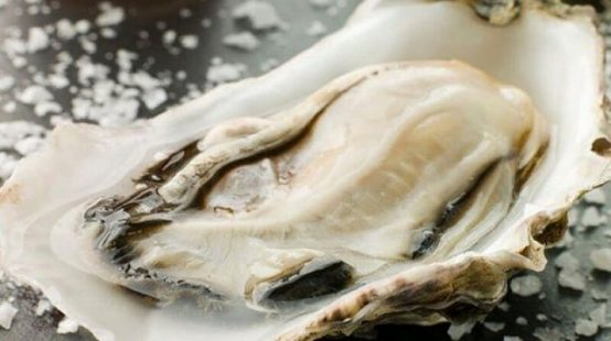 生牡蛎的功效与作用
